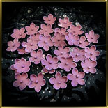 цветок Яблочный цвет 20мм темн.-фиолетовый с серединкой 25шт. мастика сах.