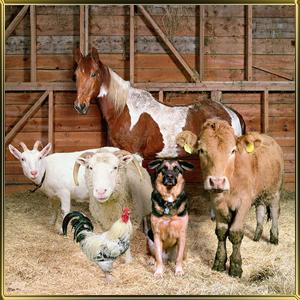 Товары для птицеводства и животноводства