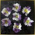 цветок Анютины глазки 40*45мм бело-фиолетовые 7шт. мастика сах.