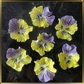 цветок Анютины глазки 40*45мм желто-сиреневые 7шт. мастика сах.