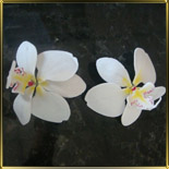 цветок Орхидея 90мм белая с розово-желтой серединкой 1шт. мастика сах.