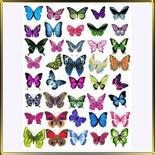 декор   Бабочки ассорти 40шт.
